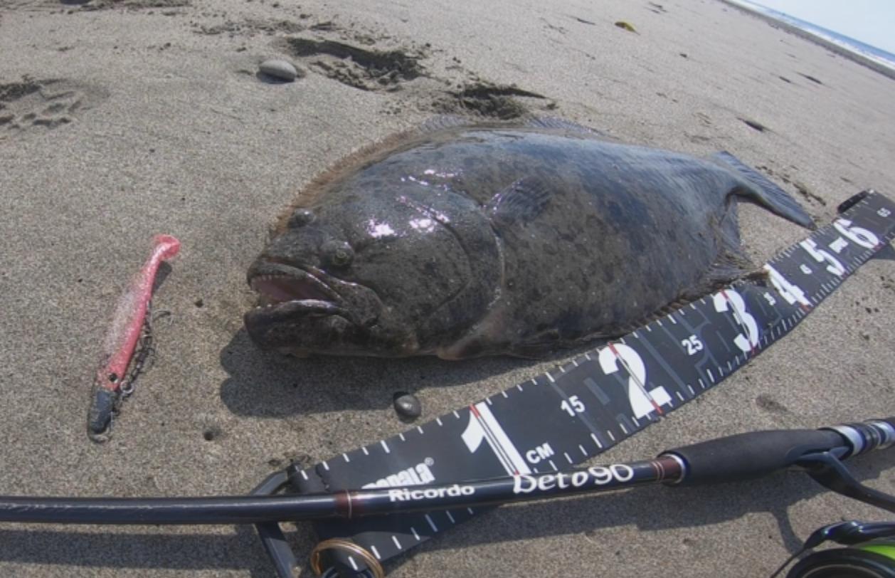 春の遠州灘。座布団ヒラメが釣れました。