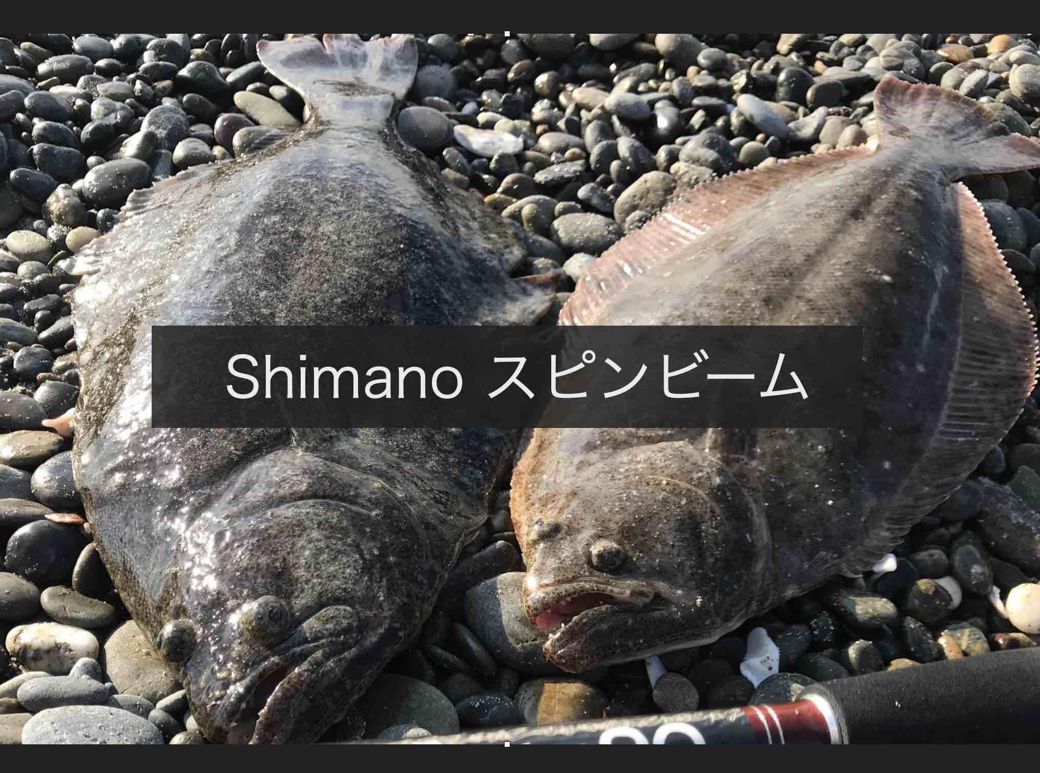 Shimano スピンビームでヒラメが釣れた